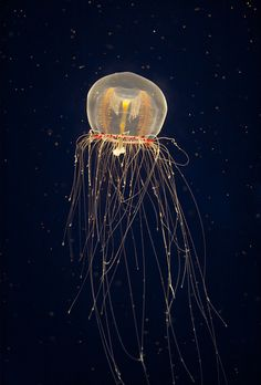 ocean animals /Have a jelly fish square tank where 2 of them go up & down, and tank turns five colors. Relaxing to watch