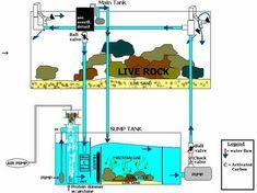 blue print for sump Saltwater Aquarium Beginner, Saltwater Aquarium Setup, Aquarium Sump, Saltwater Fish Tanks, Aquarium Design, Marine Aquarium, Reef Aquarium, Aquarium Fish Tank, Fish Aquariums