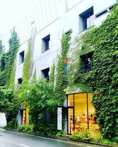那天下午東京雨不停剛好散步遇到這家店進去避雨出來到對街拍下她的綠意盎然 . #babaghuri #清澄白河 #江東區 #東京  #streetview #shopview . #igers #igersoftheday #igersjapan #Tokyo #like4like #20170618