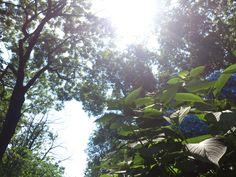 plants in the sunlight