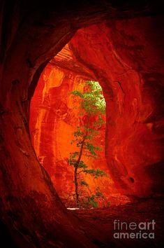 Boynton Canyon - Sedona, AZ. Need to remember this for the next time we visit