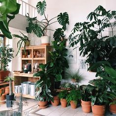 Image about aesthetic in vintage by peach on We Heart It Room With Plants, House Plants Decor, Plant Decor, Indoor Garden, Indoor Plants, Home Remodel Costs, Decoration Plante, Plants Are Friends, Plant Aesthetic