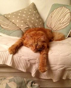 So adorable, I love Ginger Tom cats
