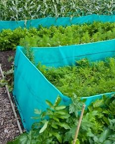 Netting to prevent carrot fly around Carrots 'Nandor' - Image No: 0221361 - GAP Gardens, garden and plant stock photography Growing Carrots, Gardening Tips, Vegetable Gardening, Small Greenhouse, Cold Frame, Garden Structures, Edible Garden, Permaculture, Fruits And Vegetables