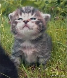"""Animated Kitten GIF • Cute and funny Kitten face. """"Crazy Cat ladies, I'm fabulous and I know it."""""""