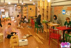 Korean Cat Cafe ~ Love the concept! ~ This pic is specifically from Cat Attic Cafe in Hongdae Korea. ~ Blogger: Cute in Korea warned that the cat cafe recommended by visit Korea website called GEO cat cafe in Hongdae is not only disgusting but overly packed w tourist. I'm a sucker for a non-tourist find & a cat lover's paradise! ♥