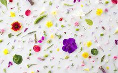 Food and Flowers by Julie Lee