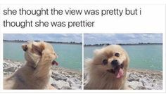 She's so pretty funny pics, funny gifs, funny videos, funny memes, funny jokes. LOL Pics app is for iOS, Android, iPhone, iPod, iPad, Tablet