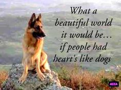 Yes, loving hearts like dogs