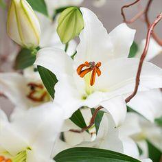 WHITE DELIGHT - 10 weißen Lilien und ein Bund Korkenzieherweide  - Kostenloser Versand - Persönliche Grußkarte gratis  #freshflowers #blooms #flowers