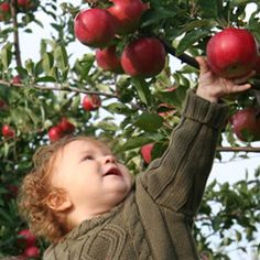 Apple picking is a great excuse to enjoy some fun time with your family! Give it a try and take the best of these beautiful fall days!