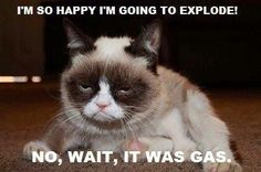 Grumpy Cat  Exploding from happiness