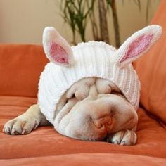 Purchase our cute Bunny Rabbit Zoo Snood dog costume. The original Easter Bunny dog snood is available online today. Cute Bunny, Bunny Rabbit, Cat Costumes, Costume Ideas, Dog Snood, Dog Rooms, Dog Photography, Dog Treats, Rescue Dogs