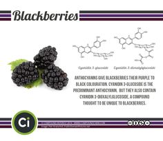 A brief look at the chemical cause of the colour of blackberries.