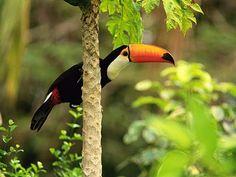 Tropical Rainforest Facts , 6 Tropical Rainforest Animal Facts In Animal Category Rainforest Facts, Rainforest Animals, Amazon Rainforest, Rainforest Flowers, Bird Wallpaper, Animal Wallpaper, Wallpaper Pictures, Forest Wallpaper, Nature Wallpaper