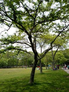 Tree in LI