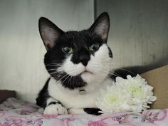 MYRNA - A1103246 - - Manhattan  ***TO BE DESTROYED 02/27/17 *** A volunteer writes: I call Myrna my little sleepyhead: she was deep in dreamland when I met her at the Care Center one evening, but as soon as she sensed my presence she bounded right up, ready for pettings and ear scratches. Friendly and confident around people, she came to us from a home: her former pet parents said she lived with adults and kids, and she played gently with the children. This black and white