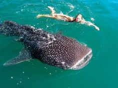 16 Under-the-Radar Spots in Mexico - Swimming with whale sharks in the Sea of Cortez