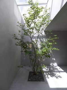 Suppose Design Office have completed the 'House in Danbara' located in Hiroshima, Japan. Suppose Design Office, Patio Grande, Plant Wallpaper, Diy Plant Stand, Office Plants, Bedroom Plants, Plant Decor, Indoor Garden, Landscape Architecture