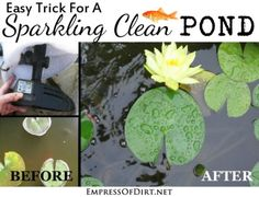 how to clear murky koi pond water