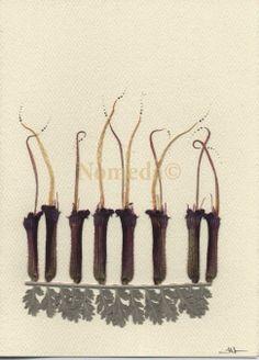 Nomedos Pieva/ Nomeda's Meadow: Atvirukai/ Cards