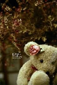 Image result for teddy bear wallpaper for iphone