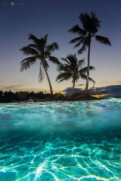 FLASH LIT PALMS by Joel  Coleman on 500px