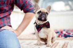 French Bulldog puppy all dressed up for family photo shoot :D