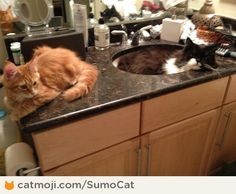 Why I have to brush my teeth in the bathtub instead of the bathroom sink. By SumoCat http://cmji.me/15sqv28 #cat #lol
