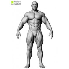 http://www.3dscanstore.com/image/cache/data/Male%20Body%20Builder/BodyBuilder_01-700x700.jpg