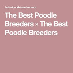The Best Poodle Breeders  » The Best Poodle Breeders