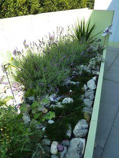 Steingarten mit Lavendel, Yucca, Edelweiss, usw.