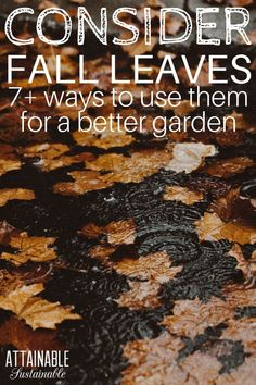 Fall leaves are quite possibly the best resource for your garden. And people will just GIVE them to you! Take advantage of it! When the seasons change and the neighborhood trees begin to drop their leaves, take note. Those leaves are a great resource for Garden Mulch, Backyard Vegetable Gardens, Herb Garden, Potager Garden, Organic Gardening, Gardening Tips, Organic Farming, Leaf Mulch, Organic Matter