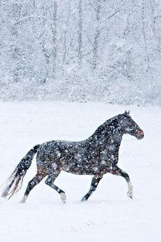 no importa cuan fuerte sea la nieve y el frio... en mi corazon siempre habra suficiente calor para amarte.