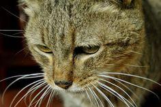 THE DAVINCI FOUNDATION FOR ANIMALS RESCUE ACROSS THE NATION Rescue info:GLOBAL OUTREACH RED - Urgencias Gatos: GINGER - SE BUSCA CORAZÓN DE ORO PARA UNA GATITA CON NECESIDADES ESPECIALES! EN ADOPCIÓN