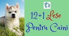 12+1 Lese Pentru Caini - Ghid Nutritie Canina