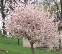 10 Best Trees For Small Yards. Gotta warn people though, albizzias that get quite old tend to split down the middle.