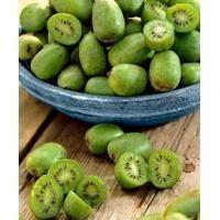 die 59 besten bilder von garten mini kiwi pflanzen garten kiwi pflanzen und exotische fr chte. Black Bedroom Furniture Sets. Home Design Ideas