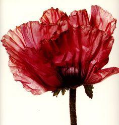 Irving Penn   Still Life and Flowers