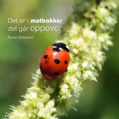 Det er i motbakker det går oppover. Wise Words, Texts, Qoutes, Poems, Barn, Positivity, Writing, Humor, Happy