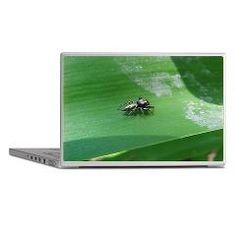 jumping spider Laptop Skin $18.69