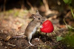 A gift for Topo by InaGlo Photography on 500px