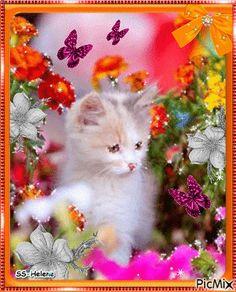 Cat among flowers.