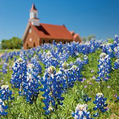 A Texas Hill Country Roadtrip - Southern Living