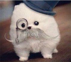 Amazingly cute Pomeranian pup!!!!
