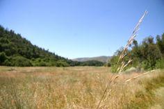 palomar mountain, california.