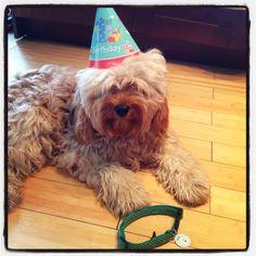 It's my first birthday!