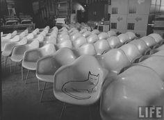 Gatopoder. » Steinberg / Eames / Mili