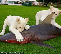 Shark Bate....