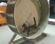 DIY Home Made Cat Wheel